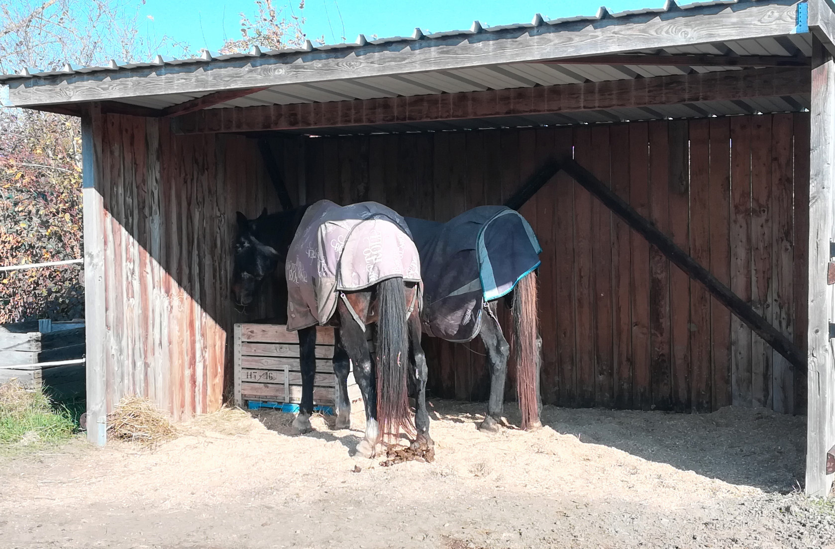 cheval agé cheval senior hiver soins arthrose