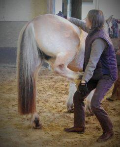 ostéopathie cheval douleur dos mal de dos Dr Isabelle PIGNARD