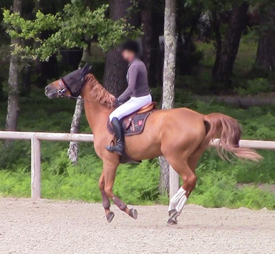 Votre cheval a-t-il mal au dos?
