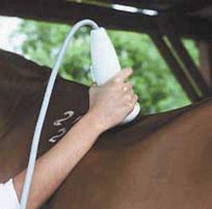 douleurs dorsales mal de dos cheval traitement