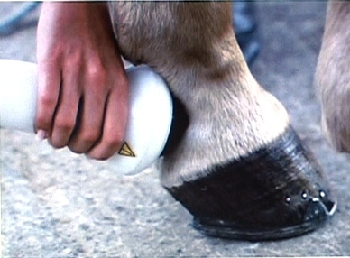 Ondes de choc focalisées chez le cheval: que peut-on traiter?